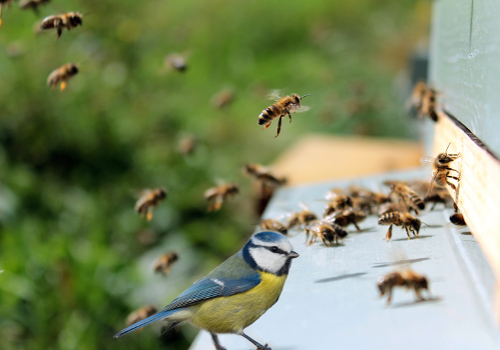 "20th International Akademie Fresenius ECOTOX Conference ""Aquatic and Terrestrial Ecotoxicology and Risk Management"" +++ONLINE CONFERENCE+++"